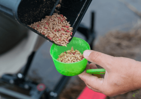 Best bait for carp in winter - maggots in box used for fishing