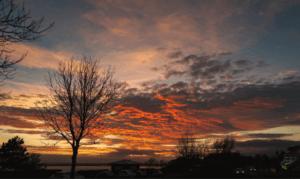 Do Carp Feed in the Winter - Mackerel Skies