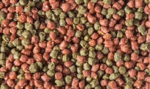 Pre-baiting for carp - Mixed Pellets