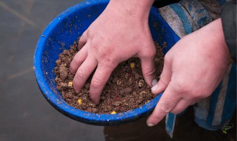 Pre-baiting for carp- mixed carp bait for feeding