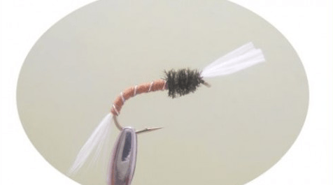 How to fly fish for carp - buzzer