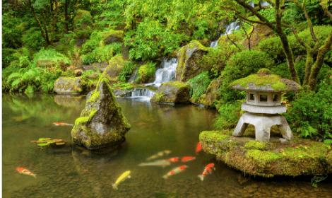 What are Koi Carp - Japanese style koi pond