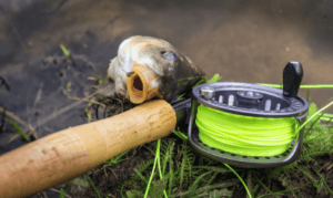 how to fly fish for carp - carp caught on fly rod and reel