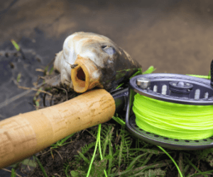 How to Fly Fish for Carp? – Easy to Follow Guide