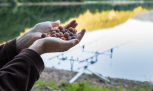 Carp Fishing with Boilies - Man holding boilies infront of carp rods