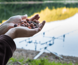 Carp Fishing with Boilies – Simple Guide