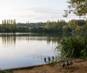 How to Catch Carp in Spring – Full Guide