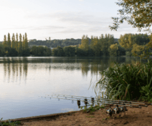 What is Commercial Carp Fishing? – Explained
