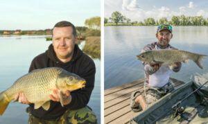 grass-carp-vs-common-carp-half-common-carp-and-half-grass-carp-on-picture