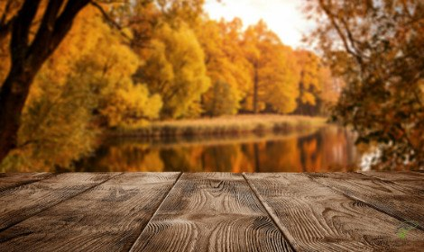 When are carp most active - Carp in lake with autumn leaves